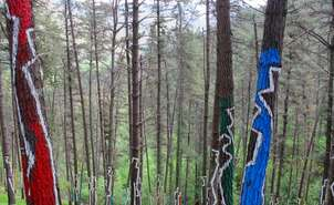 Oma Painted Forest