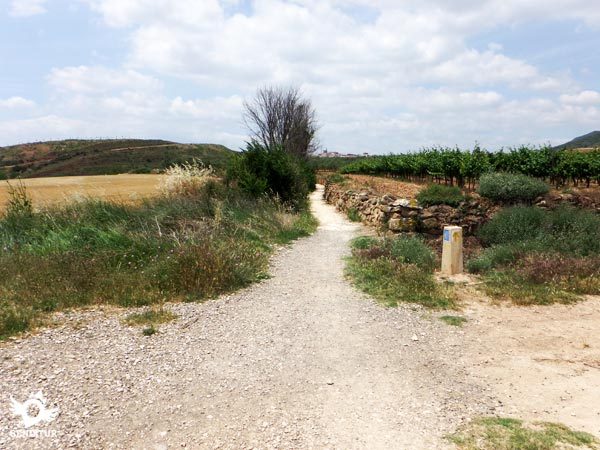 The path runs between vineyards and cereal fields
