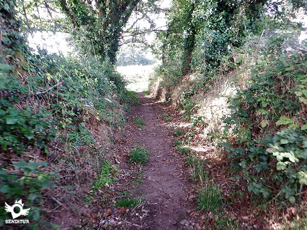 The vegetation narrows the path