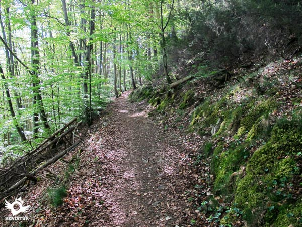 The trail goes through the forest