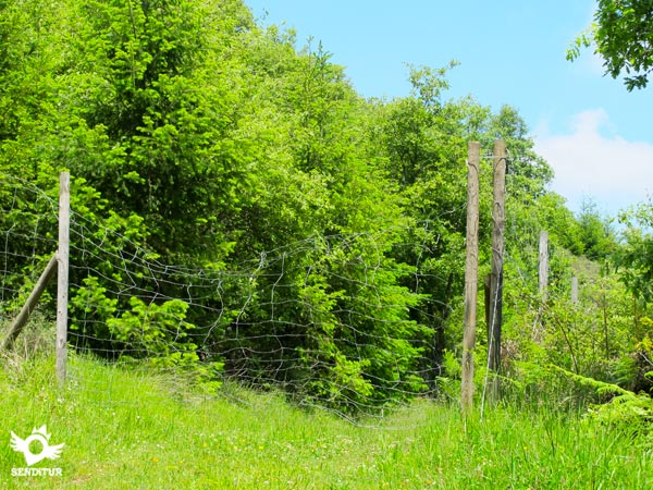 Fence, the pass is on the left.