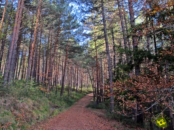 Path of the Pinewood, Hiking with the family in the Estate of Ribavellosa