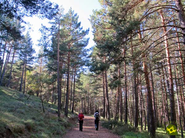 We continue along the Main Path of Pinewood
