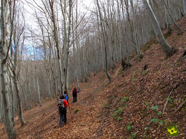 We go through the beech forest