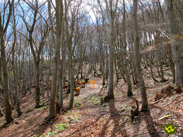 We are approaching the limits of the beech forest