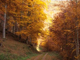 Go to Routes between Beech Forests
