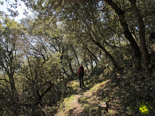 We go through the holm oak forest
